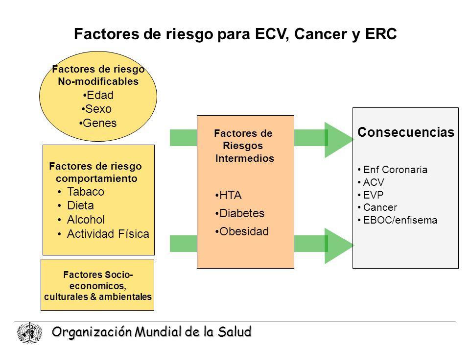 Organización Mundial de la Salud Enf Coronaria ACV EVP Cancer EBOC/enfisema Consecuencias Factores de riesgo para ECV, Cancer y ERC Factores de Riesgo