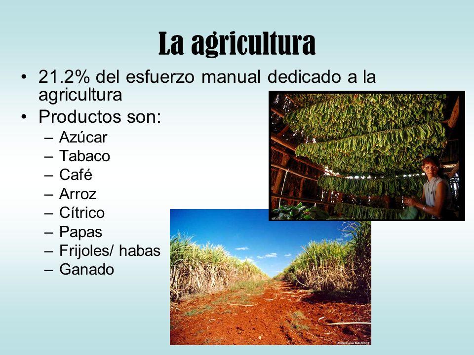La agricultura 21.2% del esfuerzo manual dedicado a la agricultura Productos son: –Azúcar –Tabaco –Café –Arroz –Cítrico –Papas –Frijoles/ habas –Ganad