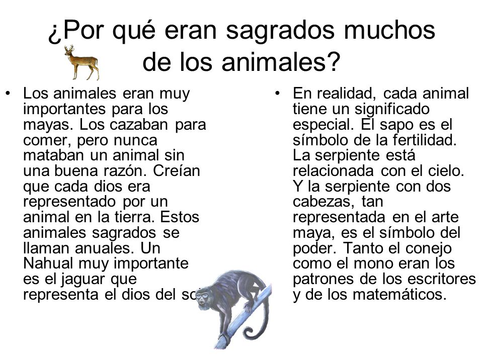 ¿Por qué eran sagrados muchos de los animales? Los animales eran muy importantes para los mayas. Los cazaban para comer, pero nunca mataban un animal