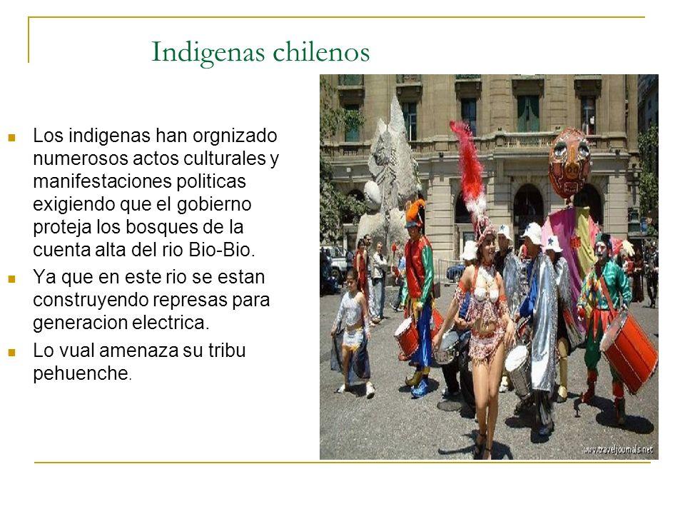 Indigenas chilenos Los indigenas han orgnizado numerosos actos culturales y manifestaciones politicas exigiendo que el gobierno proteja los bosques de