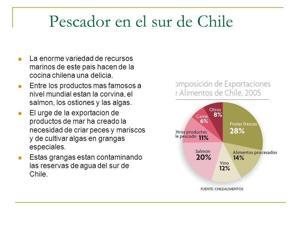 Pescador en el sur de Chile La enorme variedad de recursos marinos de este pais hacen de la cocina chilena una delicia. Entre los productos mas famoso