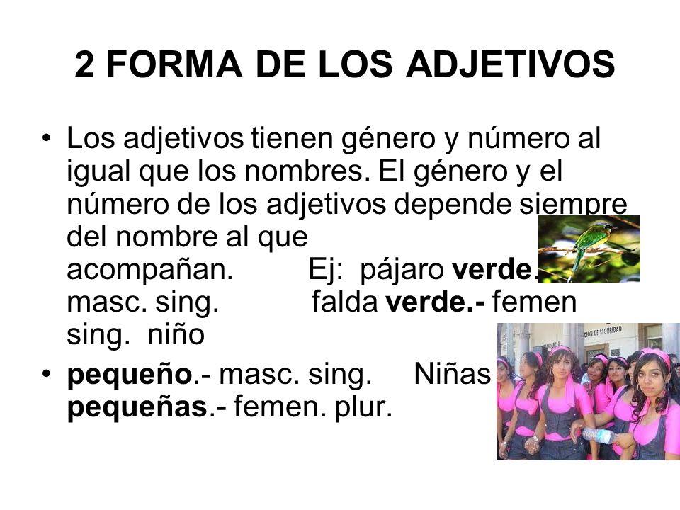 2 FORMA DE LOS ADJETIVOS Los adjetivos tienen género y número al igual que los nombres. El género y el número de los adjetivos depende siempre del nom