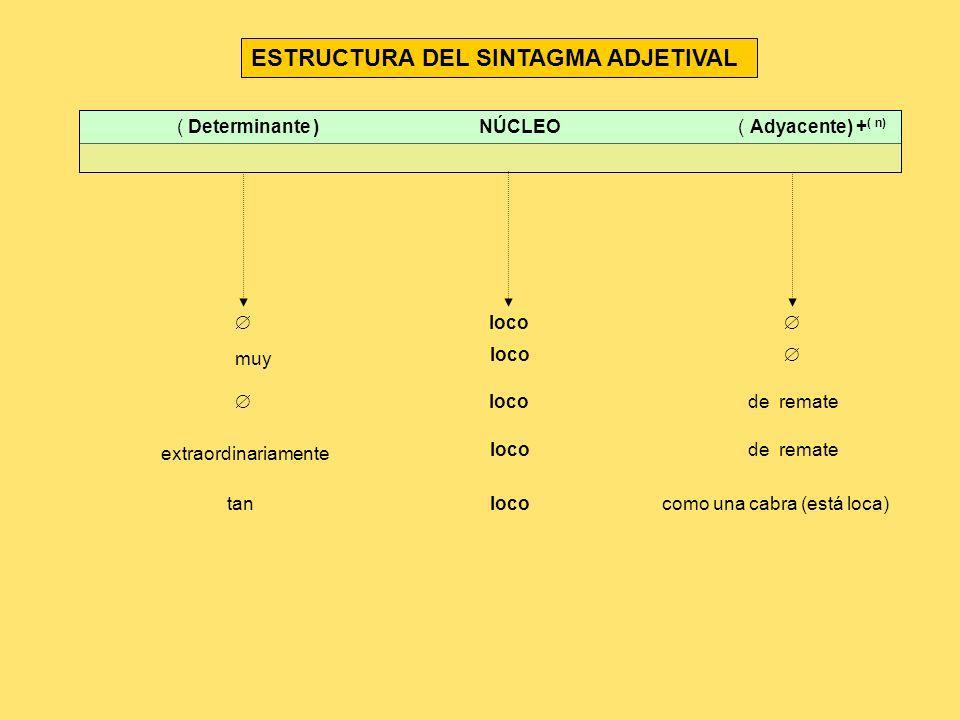 ESTRUCTURA DEL SINTAGMA ADJETIVAL ( Determinante ) NÚCLEO ( Adyacente) + ( n) loco loco muy locode remate extraordinariamente locode remate locotancom