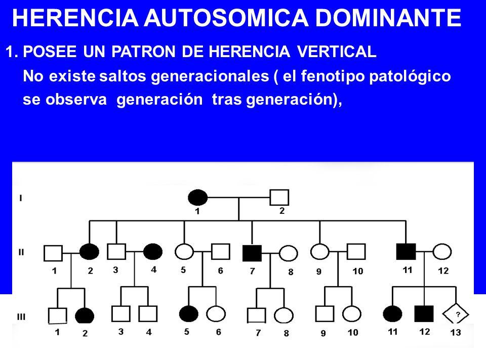 HERENCIA AUTOSOMICA DOMINANTE 1. POSEE UN PATRON DE HERENCIA VERTICAL No existe saltos generacionales ( el fenotipo patológico se observa generación t