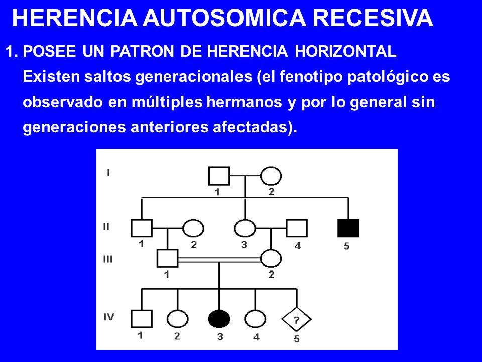 HERENCIA AUTOSOMICA RECESIVA 1. POSEE UN PATRON DE HERENCIA HORIZONTAL Existen saltos generacionales (el fenotipo patológico es observado en múltiples