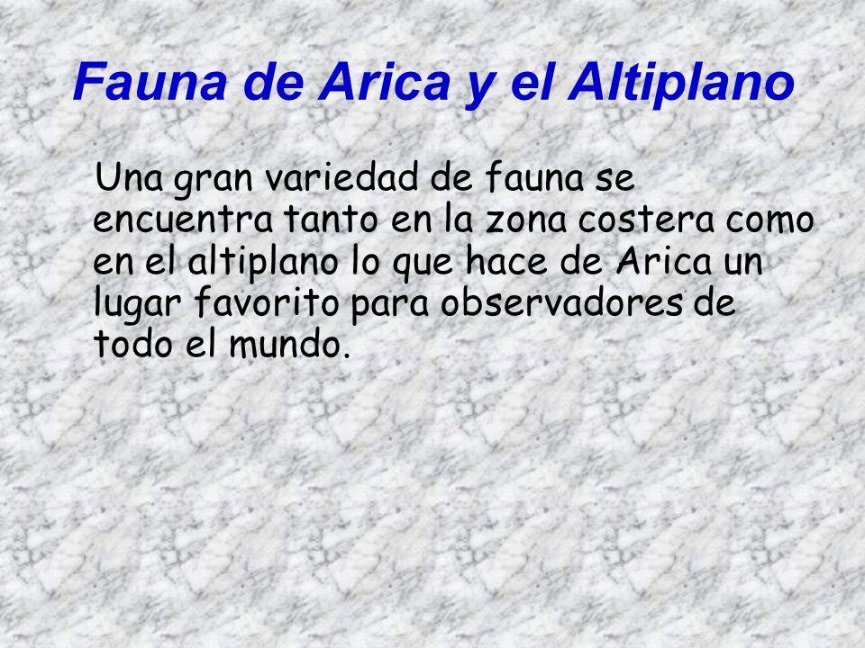 Fauna de Arica y el Altiplano En la alta cordillera, difíciles de distinguir a distancias, aún se encuentran, gracias a la protección que se les ha dado en los parques nacionales, algunos huemules pastando en las laderas de los cerros.