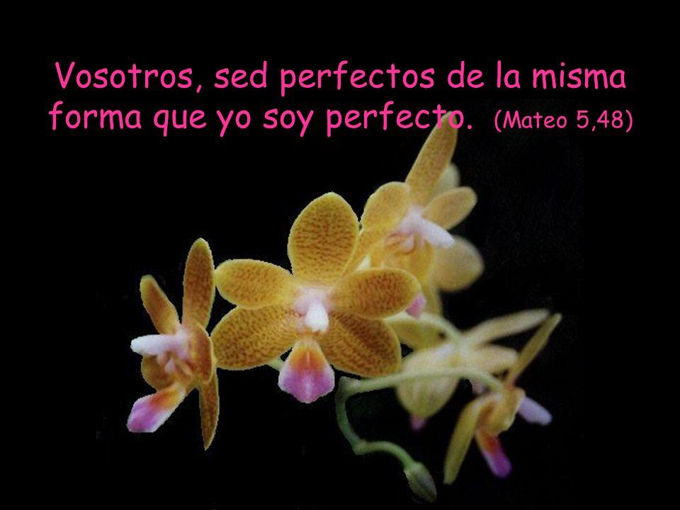 Si vosotros-as, siendo imperfectos-as sabéis dar cosas buenas a vuestros hijos e hijas, ¡cuánto más yo os daré cosas buenas a quienes me las pidan. (M