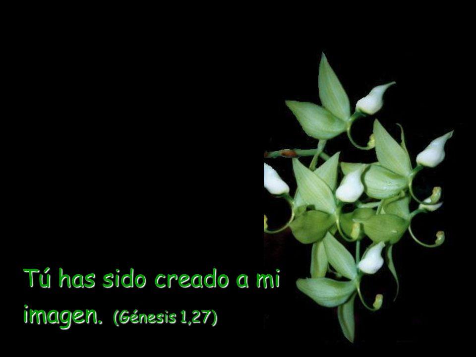 Me dedicaré a hacerte bien, y te plantaré en esta tierra firmemente. (Jeremías 32,41)