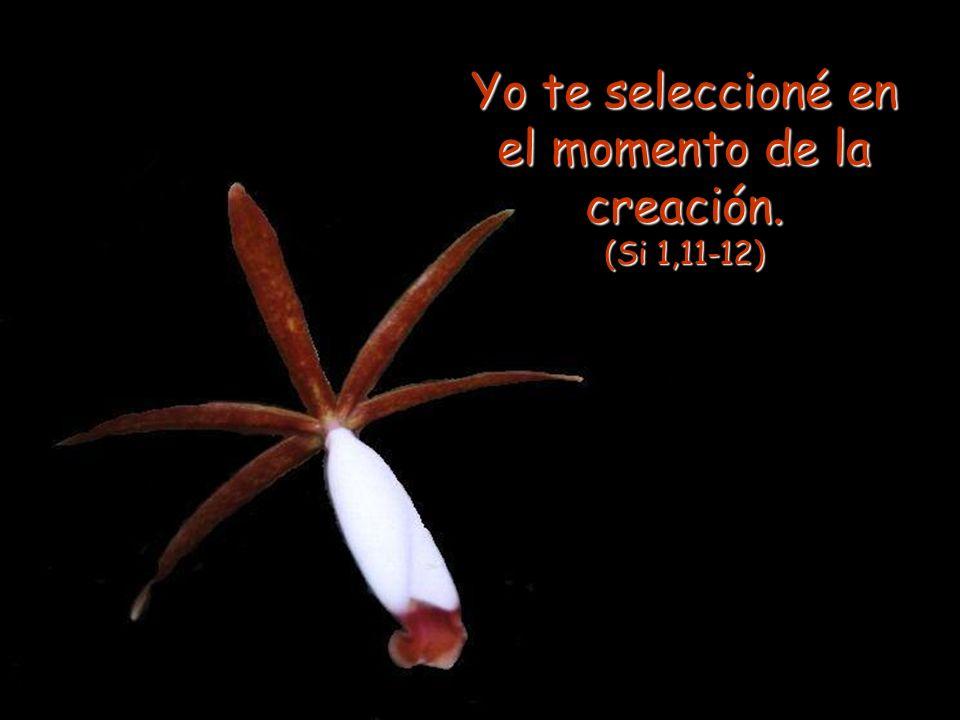 Yo te seleccioné en el momento de la creación. (Si 1,11-12)