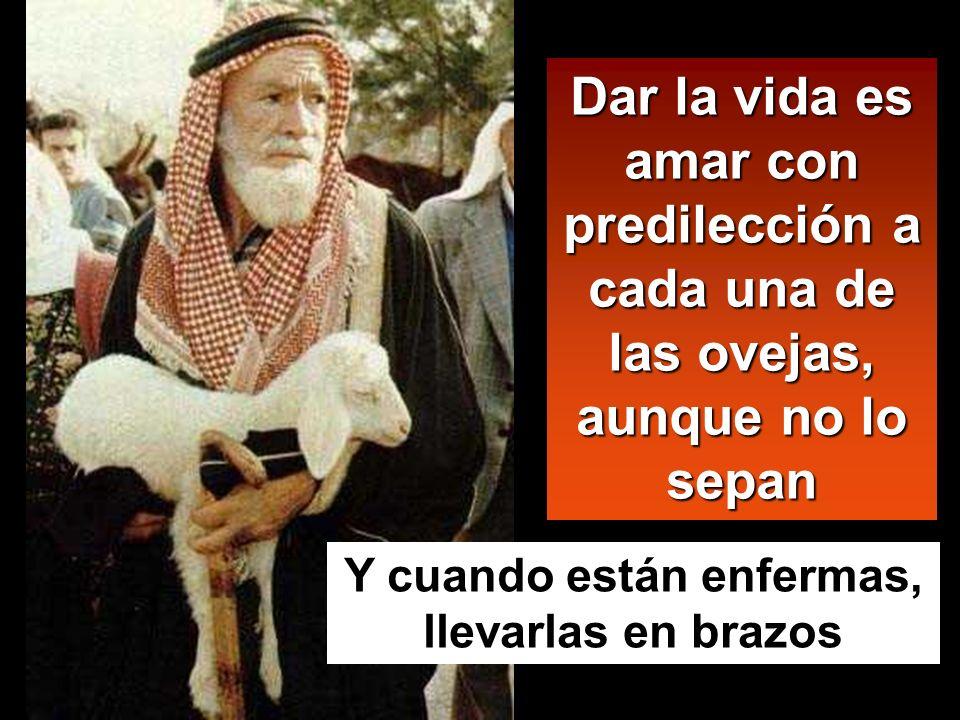 Dar la vida es amar con predilección a cada una de las ovejas, aunque no lo sepan Y cuando están enfermas, llevarlas en brazos