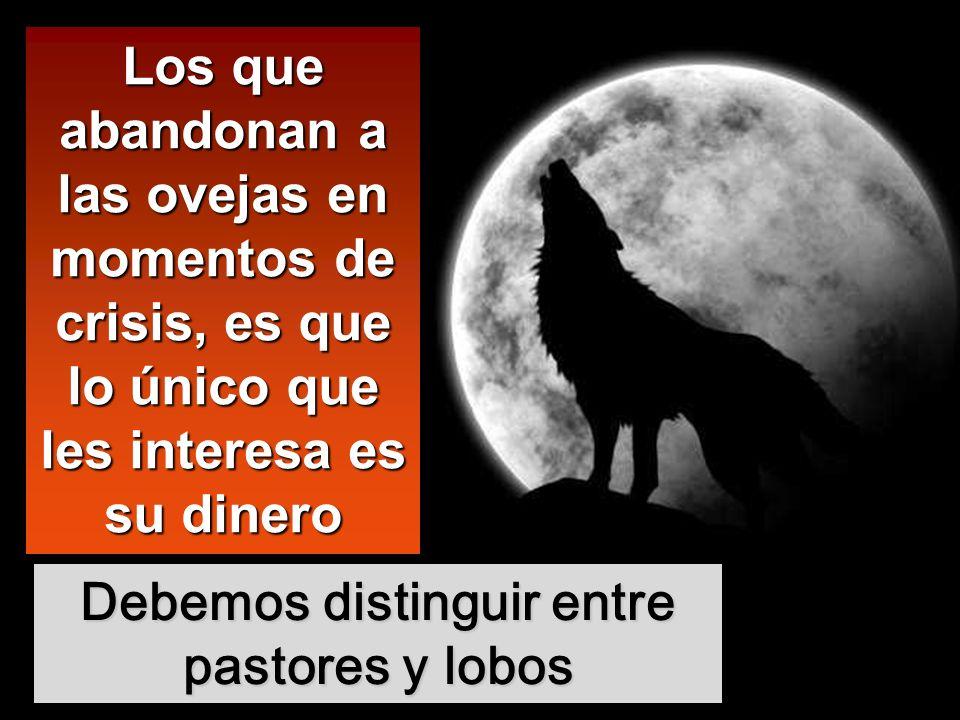 Debemos distinguir entre pastores y lobos Los que abandonan a las ovejas en momentos de crisis, es que lo único que les interesa es su dinero