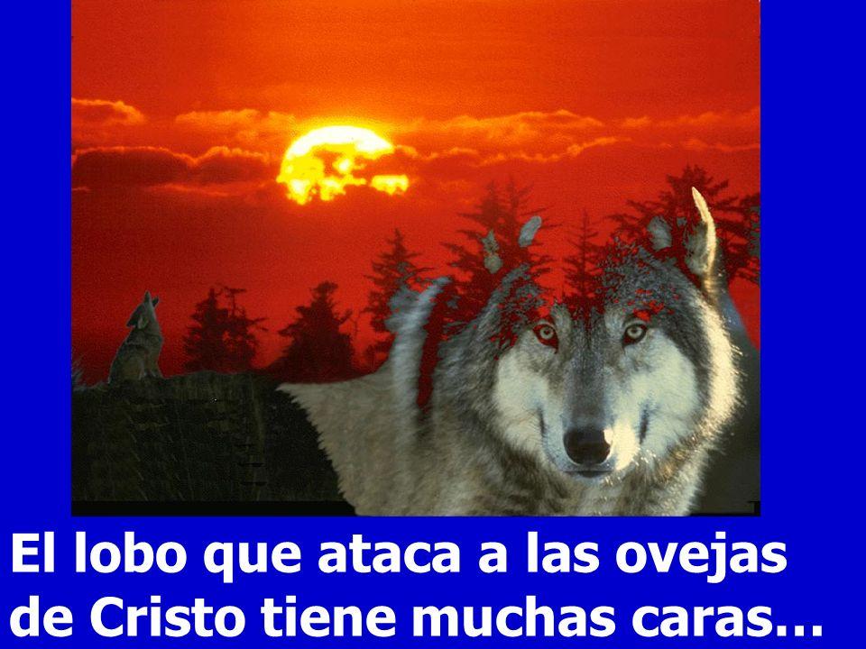 El lobo que ataca a las ovejas de Cristo tiene muchas caras…