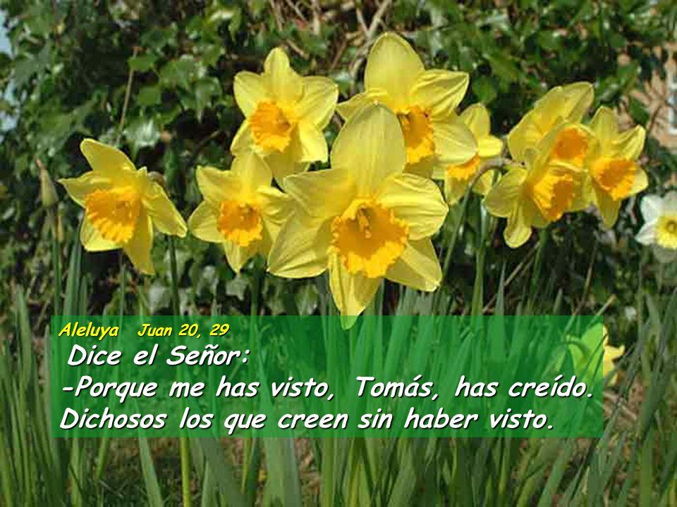 Ap 1,9-11a, 12-13, 17-19 Yo, Juan, hermano vuestro, que por amor a Jesús comparto con vosotros la tribulación y la espera paciente del reino, me encon