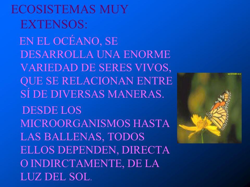 ECOSISTEMAS MUY PEQUEÑOS: EN EL AGUA QUE SE ACUMULA ENTRE LAS HOJAS DE ALGUNAS PLANTAS, VIVEN SERES MICROSCÓPICOS QUE FORMAN PARTE DE UN ECOSISTEMA,.