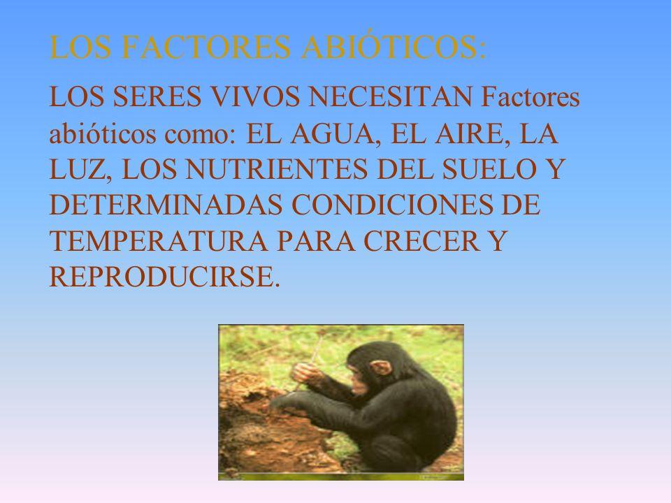 UN ECOSISTEMA ARTIFICIAL: UNA PECERA EN LA QUE HAYA PLANTAS ACUÁTICAS, PECES, CARACOLES Y UN FONDO DE PIEDRAS O ARENA, DONDE SE ALOJEN BACTERIAS Y HON