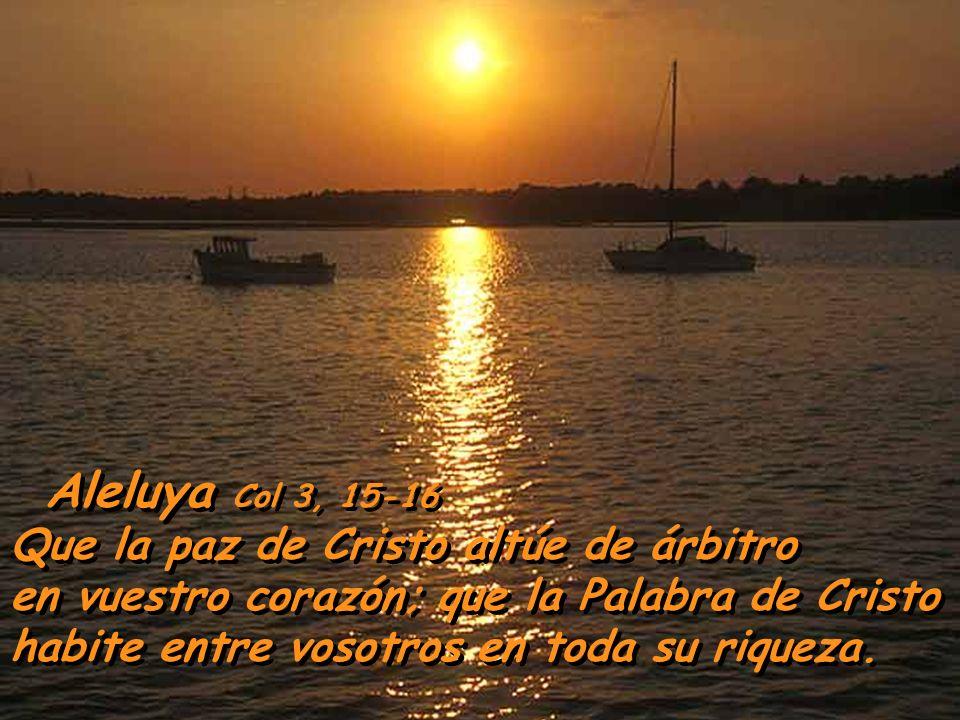 Sois elegidos de Dios, pueblo suyo y objeto de su amor; revest í os, pues, de sentimientos de compasi ó n, de bondad, de humildad, de mansedumbre y de
