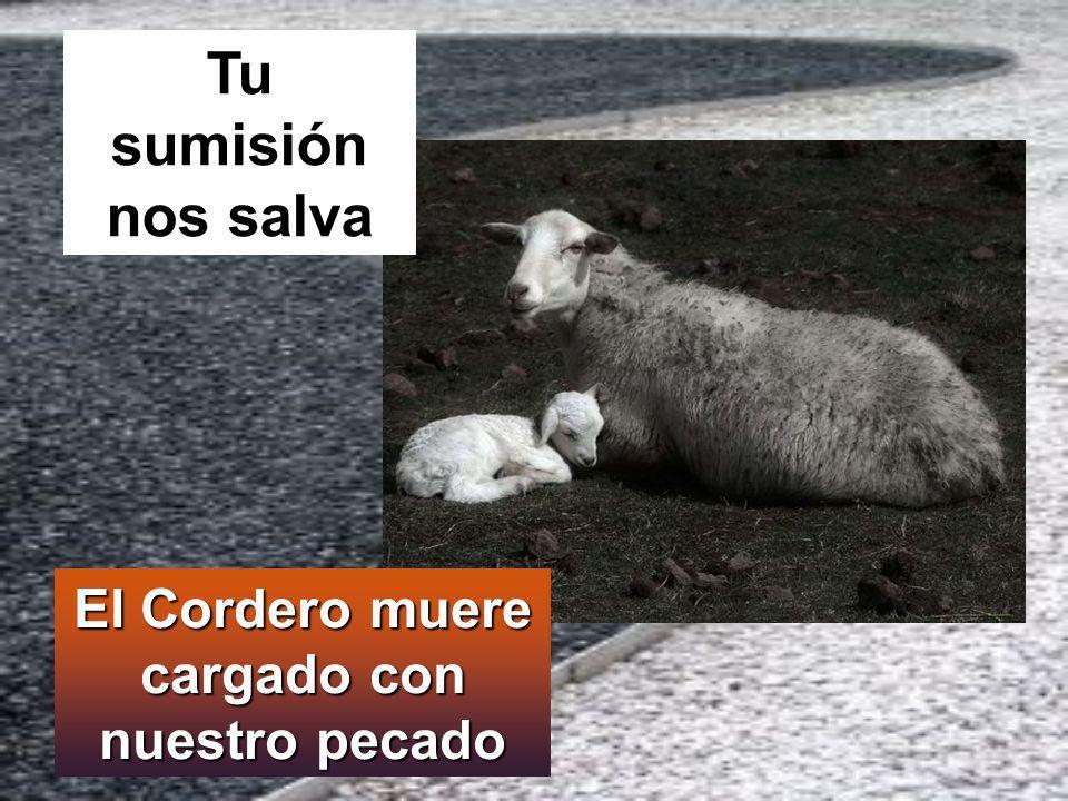 El Cordero muere cargado con nuestro pecado Tu sumisión nos salva