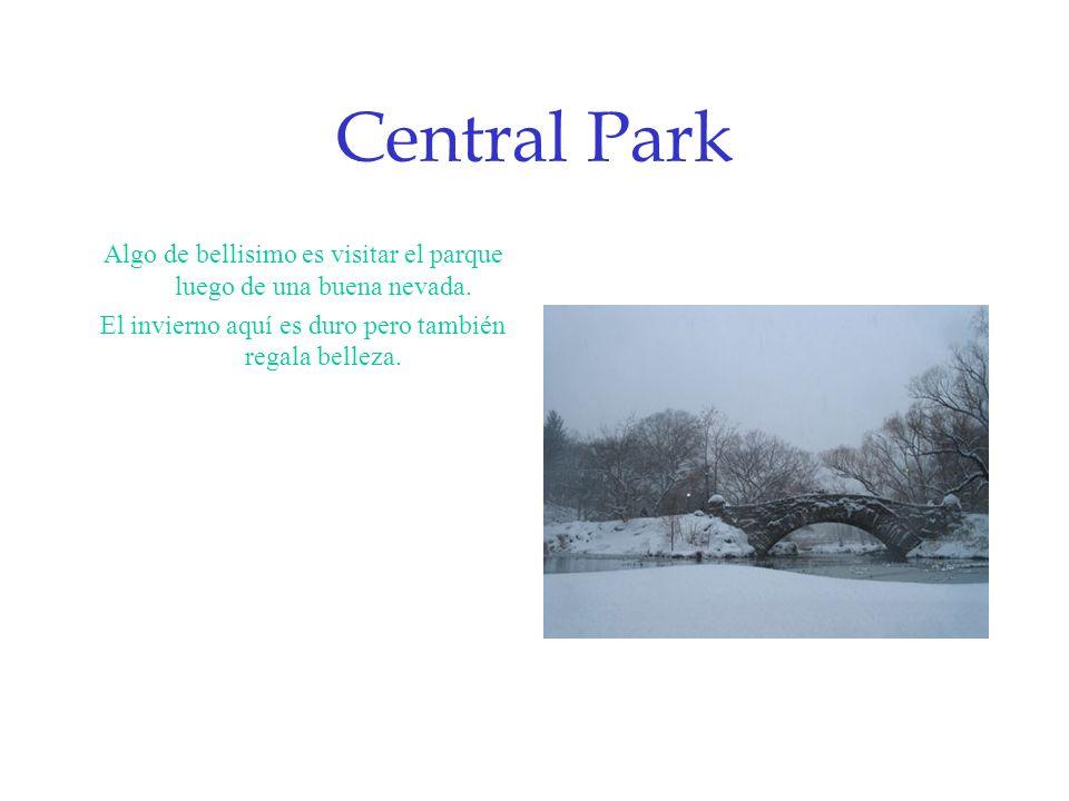 Central Park Algo de bellisimo es visitar el parque luego de una buena nevada. El invierno aquí es duro pero también regala belleza.