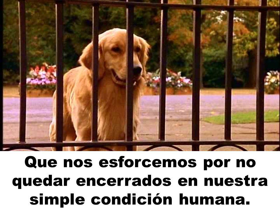 Que nos esforcemos por no quedar encerrados en nuestra simple condición humana.