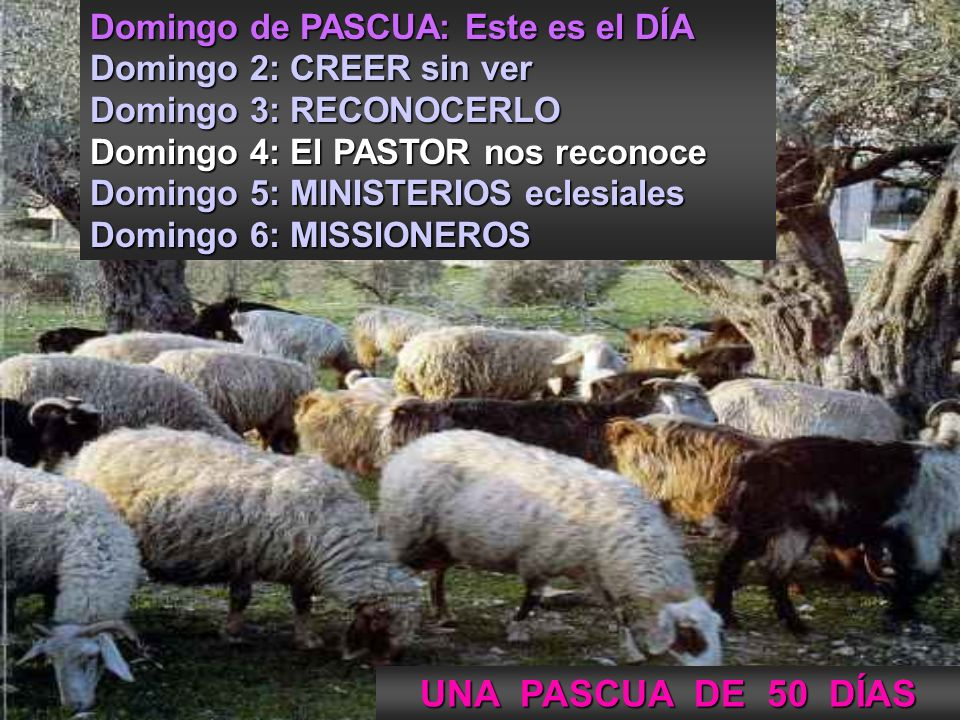 Monjas de Sant Benet de Montserrat 4 de PASCUA C Surrexit Pastor bonus Mendelssohn 927 (Escolanía de Montserrat) Surrexit Pastor bonus Mendelssohn 927