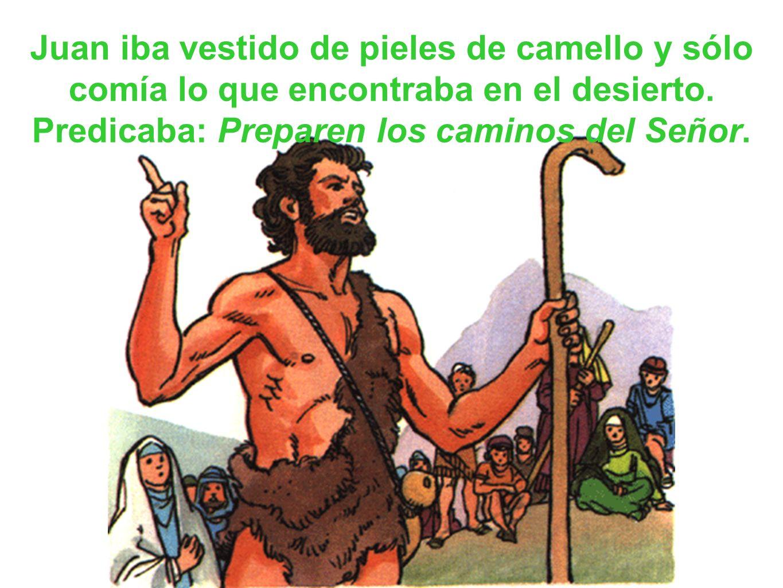 Juan iba vestido de pieles de camello y sólo comía lo que encontraba en el desierto. Predicaba: Preparen los caminos del Señor.