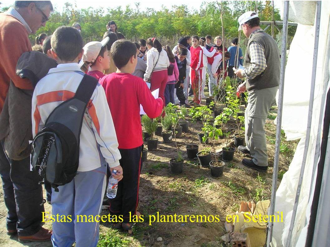 Pepe nos explica algunos tipos de plantas