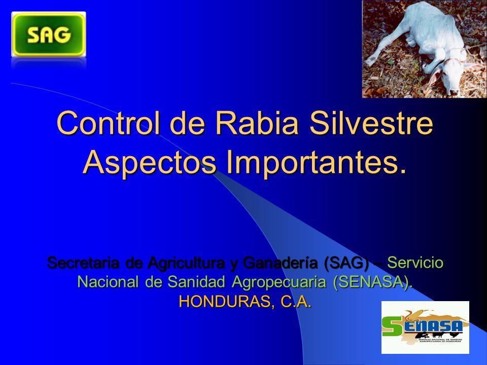 Control de Rabia Silvestre Aspectos Importantes. Secretaria de Agricultura y Ganadería (SAG) – Servicio Nacional de Sanidad Agropecuaria (SENASA). HON