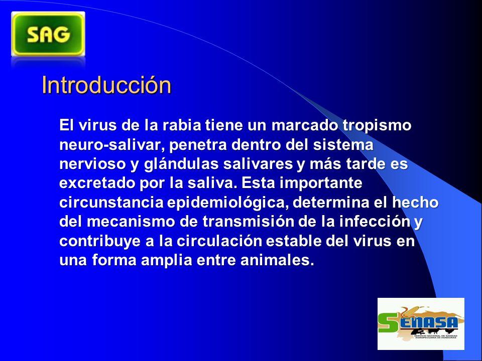Introducción El virus de la rabia tiene un marcado tropismo neuro-salivar, penetra dentro del sistema nervioso y glándulas salivares y más tarde es ex
