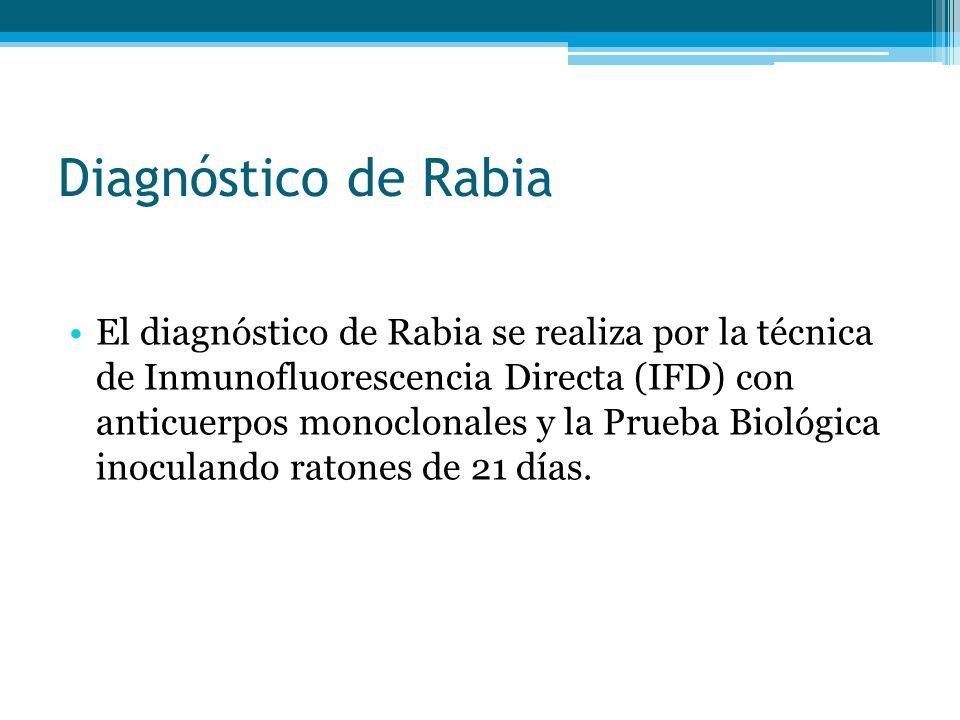 Diagnóstico de Rabia El diagnóstico de Rabia se realiza por la técnica de Inmunofluorescencia Directa (IFD) con anticuerpos monoclonales y la Prueba Biológica inoculando ratones de 21 días.