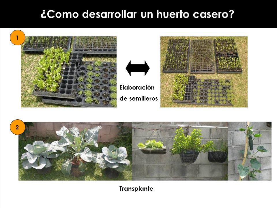 ¿ Como desarrollar un huerto casero? 1 Elaboración de semilleros 2 Transplante