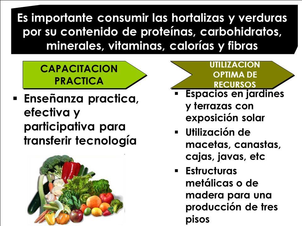Es importante consumir las hortalizas y verduras por su contenido de proteínas, carbohidratos, minerales, vitaminas, calorías y fibras UTILIZACION OPT