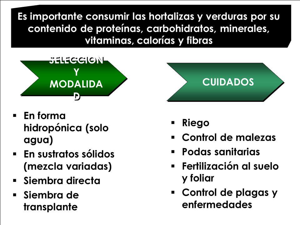 Es importante consumir las hortalizas y verduras por su contenido de proteínas, carbohidratos, minerales, vitaminas, calorías y fibras SELECCION Y MOD