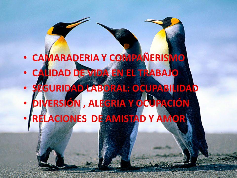 CAMARADERIA Y COMPAÑERISMO CALIDAD DE VIDA EN EL TRABAJO SEGURIDAD LABORAL: OCUPABILIDAD DIVERSIÓN, ALEGRIA Y OCUPACIÓN RELACIONES DE AMISTAD Y AMOR.