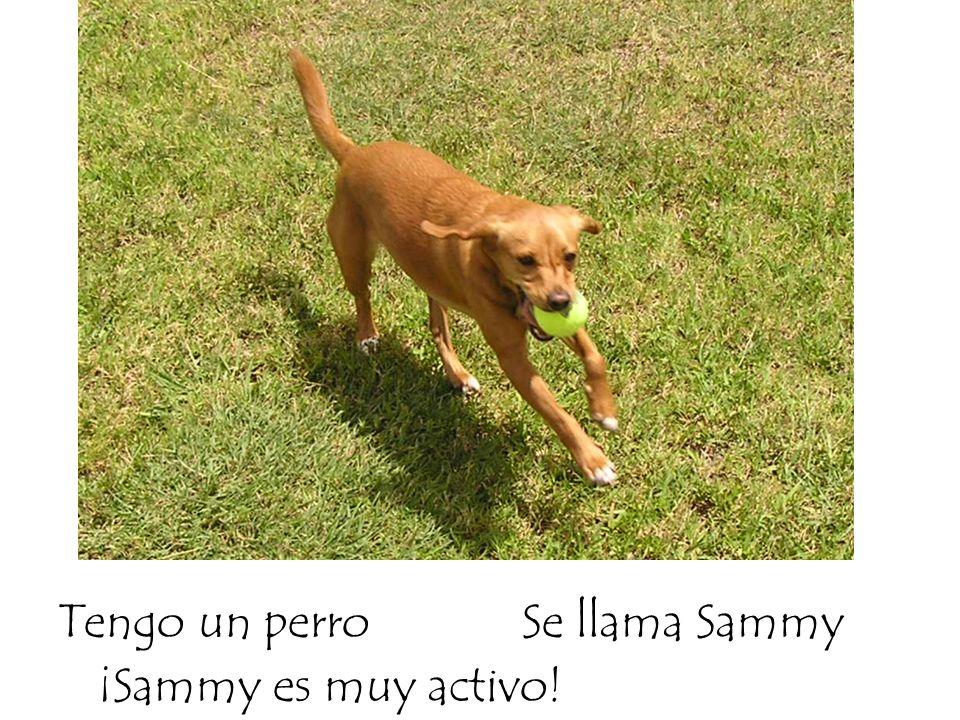 Tengo un perroSe llama Sammy ¡Sammy es muy activo!