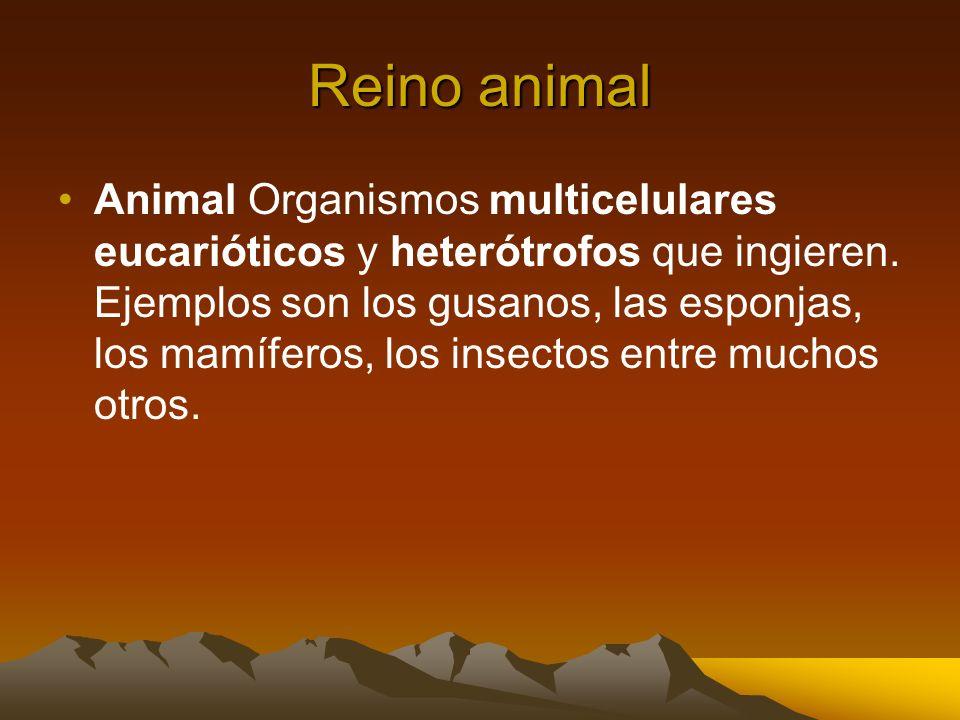 Reino animal Animal Organismos multicelulares eucarióticos y heterótrofos que ingieren. Ejemplos son los gusanos, las esponjas, los mamíferos, los ins