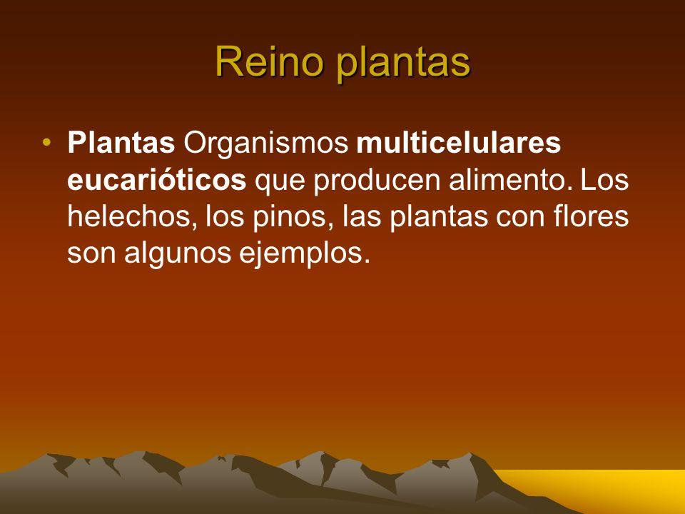 Reino plantas Plantas Organismos multicelulares eucarióticos que producen alimento. Los helechos, los pinos, las plantas con flores son algunos ejempl