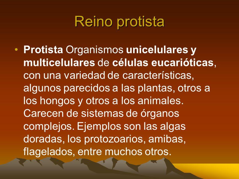 Reino protista Protista Organismos unicelulares y multicelulares de células eucarióticas, con una variedad de características, algunos parecidos a las