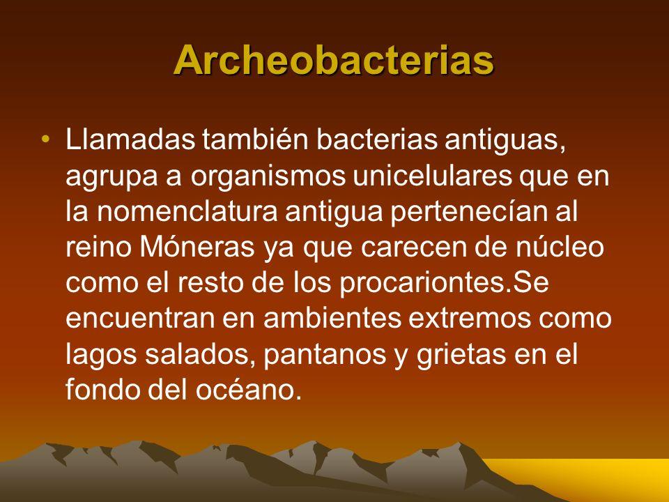 Archeobacterias Llamadas también bacterias antiguas, agrupa a organismos unicelulares que en la nomenclatura antigua pertenecían al reino Móneras ya q