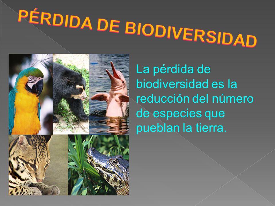 La pérdida de biodiversidad es la reducción del número de especies que pueblan la tierra.