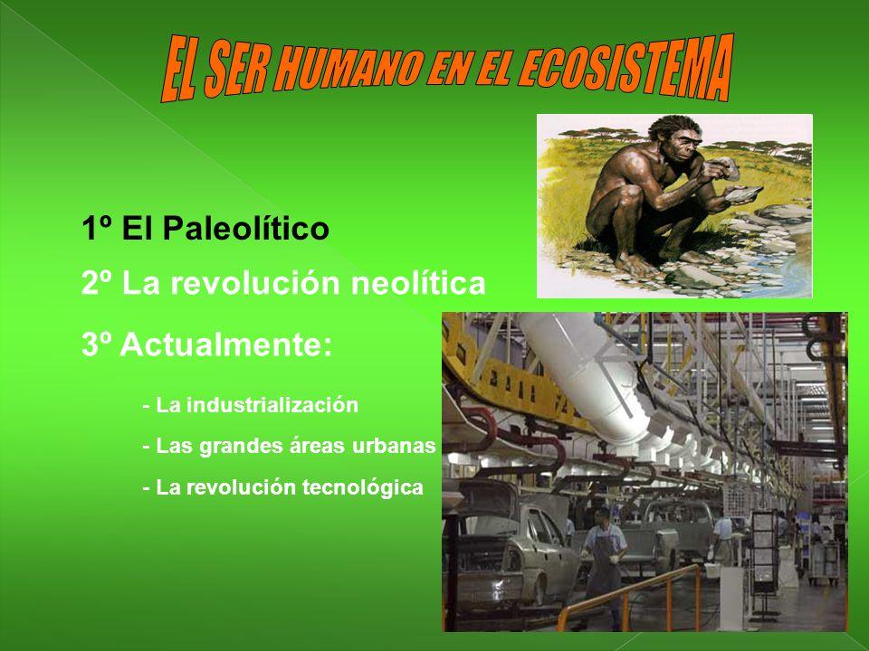 1º El Paleolítico 2º La revolución neolítica 3º Actualmente: - La industrialización - Las grandes áreas urbanas - La revolución tecnológica