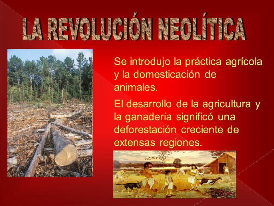 Se introdujo la práctica agrícola y la domesticación de animales. El desarrollo de la agricultura y la ganadería significó una deforestación creciente
