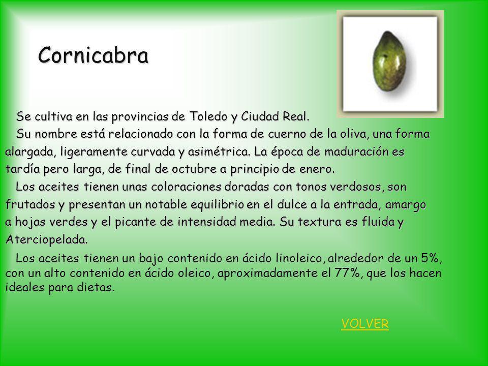 Cornicabra Se cultiva en las provincias de Toledo y Ciudad Real. Se cultiva en las provincias de Toledo y Ciudad Real. Su nombre está relacionado con