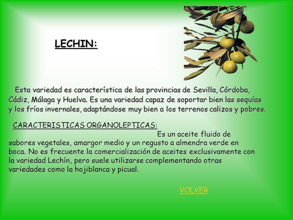LECHIN: Esta variedad es característica de las provincias de Sevilla, Córdoba, Esta variedad es característica de las provincias de Sevilla, Córdoba,