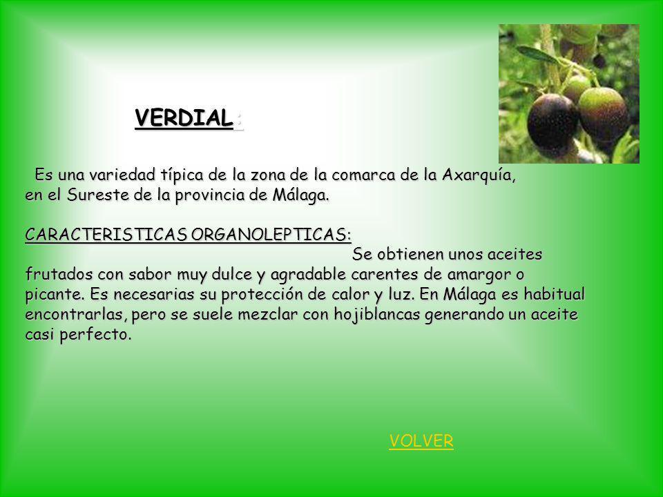 VERDIAL: Es una variedad típica de la zona de la comarca de la Axarquía, Es una variedad típica de la zona de la comarca de la Axarquía, en el Sureste