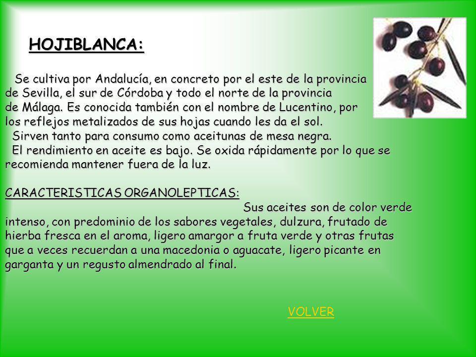 HOJIBLANCA: Se cultiva por Andalucía, en concreto por el este de la provincia Se cultiva por Andalucía, en concreto por el este de la provincia de Sev