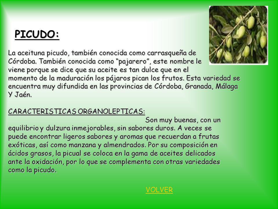 PICUDO: La aceituna picudo, también conocida como carrasqueña de Córdoba. También conocida como pajarero, este nombre le viene porque se dice que su a