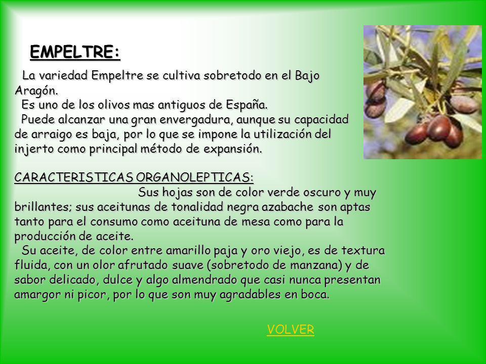 EMPELTRE: La variedad Empeltre se cultiva sobretodo en el Bajo La variedad Empeltre se cultiva sobretodo en el BajoAragón. Es uno de los olivos mas an