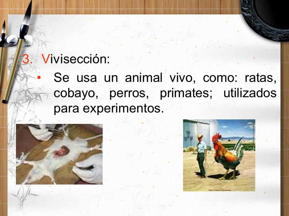 3.Vivisección: Se usa un animal vivo, como: ratas, cobayo, perros, primates; utilizados para experimentos.