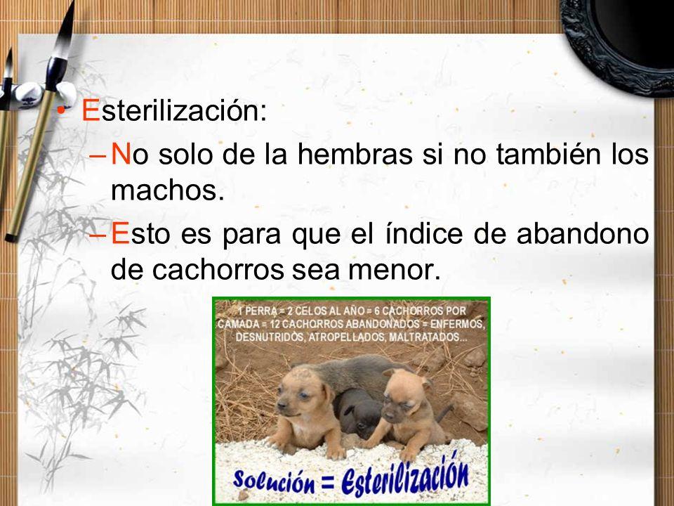 Esterilización: –No solo de la hembras si no también los machos. –Esto es para que el índice de abandono de cachorros sea menor.