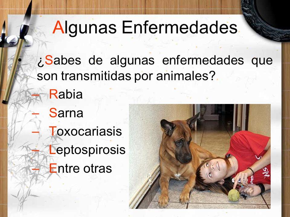 Algunas Enfermedades ¿Sabes de algunas enfermedades que son transmitidas por animales? –Rabia –Sarna –Toxocariasis –Leptospirosis –Entre otras